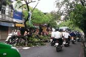 Giông lốc làm 2 người chết, 3 bị thương, gần 1300 cây xanh bị gãy đổ