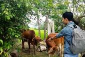 Vụ xẻ thịt bò chính sách: Dàn lãnh đạo xã bị kỷ luật ra sao