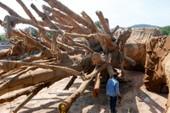 Phạt chủ cây 'siêu khủng' 750.000 đồng
