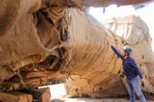 Toàn cảnh vụ cây 'khủng' bị giữ tại Thừa Thiên-Huế