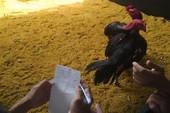 Nạn đánh bạc tại Festival Huế: Ban tổ chức nói gì?