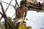Thủy điện tăng cường xả nước cứu cá trên sông Bồ