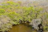 Hút hồn trước vẻ đẹp của rừng ngập mặn xứ Huế mùa thu