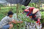 Bình Phước liên kết vùng phát triển nông nghiệp công nghệ cao