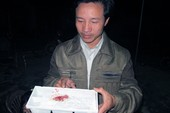 Kỳ lạ chuyện chó đực đẻ con ở Nghệ An