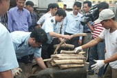 Phát hiện ngà voi trong container thép phế liệu