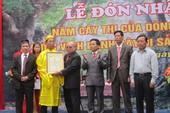 5 cây thị cổ đón bằng công nhận Cây Di sản Việt Nam