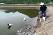 Hàng ngàn cá nuôi bị đầu độc bằng thuốc trừ sâu
