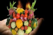 Hiểm họa từ xịt thuốc cho trái cây