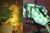 Trộm chó dùng súng điện bắn bị thương công an