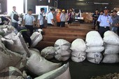Gần 4 tấn nghi vảy tê tê cập cảng Cát Lái