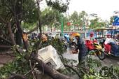 TP.HCM: Mưa gió rất lớn, người đi đường hoảng loạn vì cây ngã