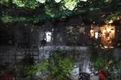 Sài Gòn đang nóng bất ngờ đổ mưa