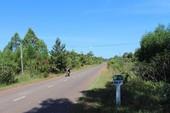 Mất 17 ha rừng để làm đường ven hồ Trị An