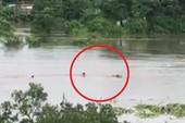 Liều mình bơi giữa dòng lũ cứu bò bị trôi