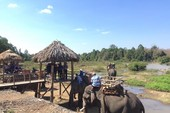 Thích thú với cưỡi voi vượt sông ngày Tết