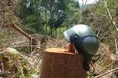 Thanh tra việc giao đất cho dự án phá rừng ở đồi Kumagai