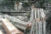 Bình Thuận yêu cầu xử nghiệm vụ phá 266 m3 gỗ ở rừng Sông Lũy