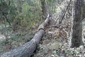 Kiểm điểm trách nhiệm, khởi tố vụ phá rừng Tà Kóu