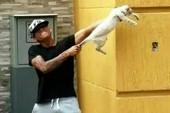 Tung video tra tấn mèo dã man, hai cầu thủ bị sa thải
