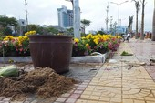 Đường hoa ở Phú Yên bị 'cướp'
