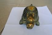 Người dân phát hiện rùa đồng cổ