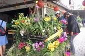 Lý thú chợ lan rừng trên vỉa hè trung tâm thành phố