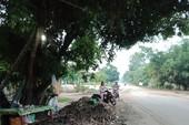 Vụ người thu gom mì mót chết: MTTQ tỉnh chờ công an trả lời