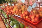 Cuộc đấu xảo hoành tráng tại 'Vương quốc trái cây' Chợ Lách