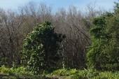 Để chết 9 ha rừng phòng hộ, 2 kiểm lâm bị kiểm điểm