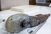 Phát hiện 5 loài sinh vật biển mới kỳ dị chưa từng thấy