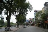 Gần 500 cây cổ thụ phải di dời để mở rộng đường
