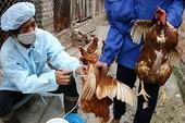 Nghệ An: Phát hiện 2 bệnh nhân lây nhiễm cúm A/H5N6