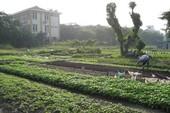 Ý kiến của Bộ TN&MT về khu vườn rau phường 6, quận Tân Bình