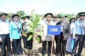 Đoàn nghị sĩ trồng 50 cây bàng vuông ở Cần Giờ