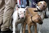 Làm sao để dắt chó ra đường mà không bị phạt?