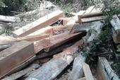 13 vụ án phá rừng Sông Lũy phải tạm đình chỉ