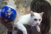 Chú mèo ở Cung điện Mùa đông kế thừa bạch tuộc Paul