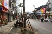 Thực hư chuyện trồng cây dưới lòng đường ở Uông Bí