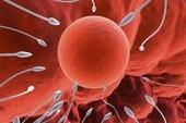 Vợ chồng hiếm muộn nên ăn gì dễ thụ thai?