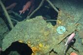 Tìm thấy tàu ngầm mất tích bí ẩn sau 103 năm