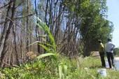 Hơn 3 ha rừng đặc dụng chết chưa rõ nguyên nhân