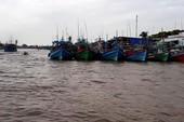 Hơn 1.000 tàu trú tránh bão tại âu thuyền Ngọc Hiển