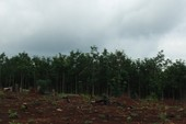Thanh tra phát hiện nhiều sai phạm trong giao đất ở Đăk Nông