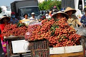 Kỷ lục mới: Rau quả mang về 3,5 tỉ USD cho Việt Nam