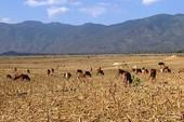 Nông nghiệp tăng trưởng âm do sự cố môi trường, hạn hán