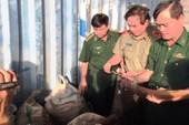 Phát hiện tàu chở 10 tấn ngà voi vào cảng Tiên Sa