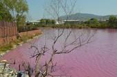 Bà Rịa-Vũng Tàu: Cả vùng nước chuyển màu đỏ tím