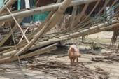 Phóng sự ảnh: Làng biển Quảng Bình xác xơ sau bão