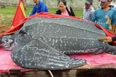 Chôn cất 'cụ' rùa khủng dài 3 m, nặng hơn nửa tấn